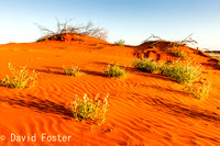 Red Sand in the Morning, Outback Queensland