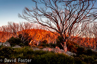 Sunrise near Wallace's Hut, Bogong High Plains