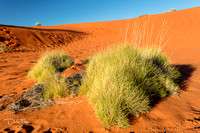 Red Sand Dunes and Spinefex