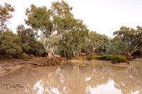 Bulloo River at Thargomindah