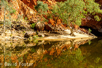 River red gum reflections, Ormiston Gorge, West MacDonnell Ranges