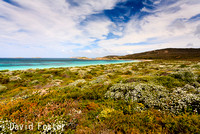 Wild Flowers at Rossiter Bay, Cape le Grand National Park
