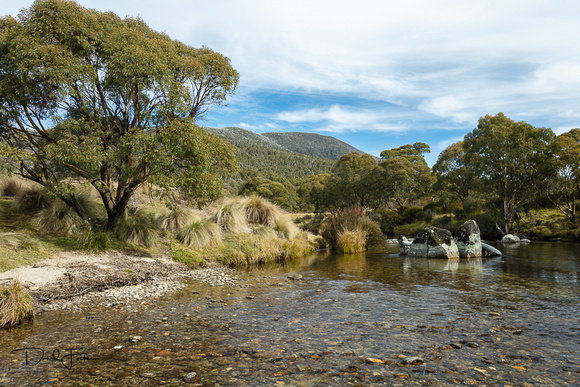 Morning on the Thredbo River