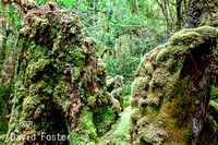 The Mossy Green World of the Creepy Crawly Walk, Scotts Peak Road